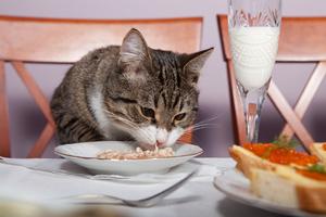 Кормим кота через шприц