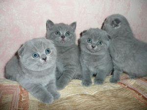 Котята и уход за ними