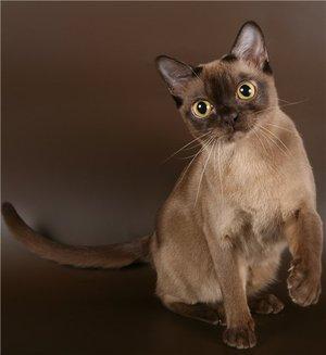 знакомство кошки с другими питомцами