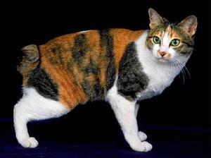 Содержание кота особенности