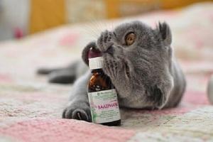 Чем заменить валерьянку коту