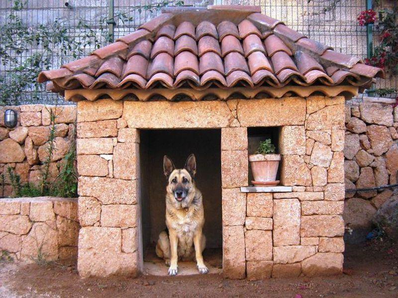 собачі будки