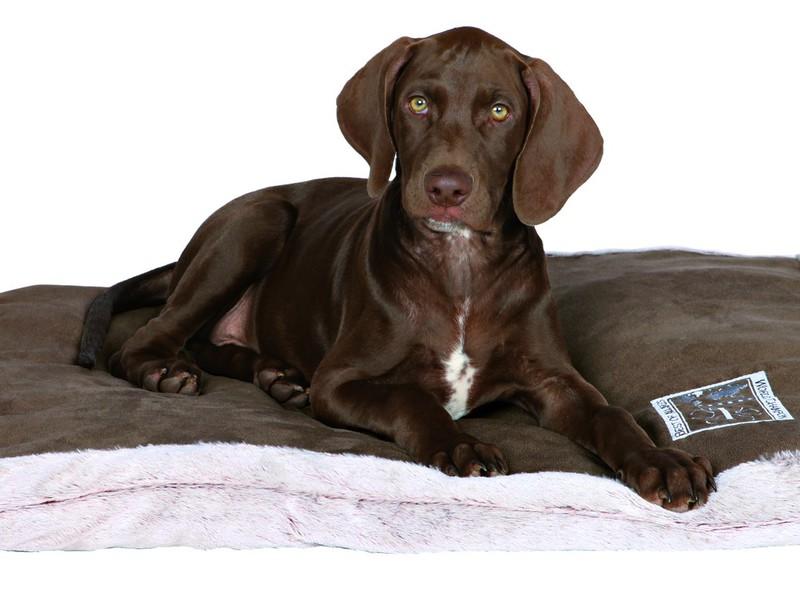 Различия лежанок для собак по уровню жёсткости