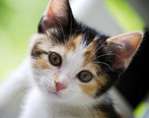 Кличка коту редкая