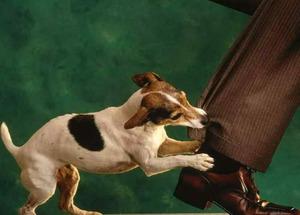 Как отучить щенка хватать за ноги и кусаться: дрессировка, игры и советы для хозяев