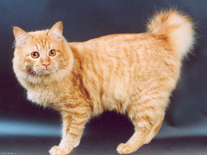 Описание про котов