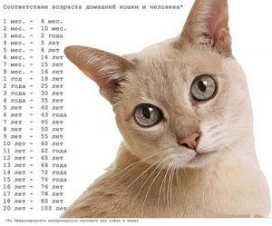 Коту 1 год сколько это по человеческим меркам