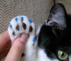 антицарапки для кошек инструкция - фото 4