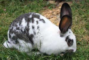 породы кроликов с фотографиями и названиями домашних