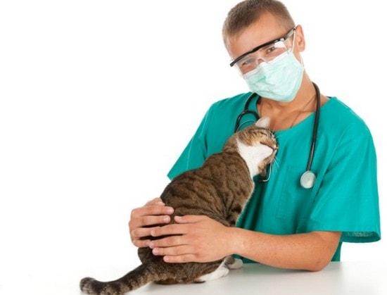 Кот и доктор