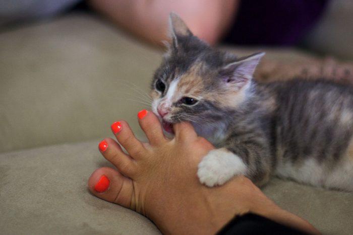 Кот кусает палец