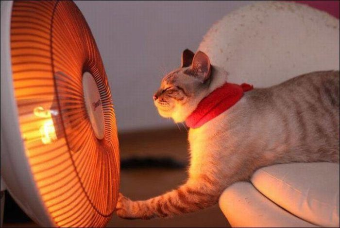 Кот возле тепловентилятора