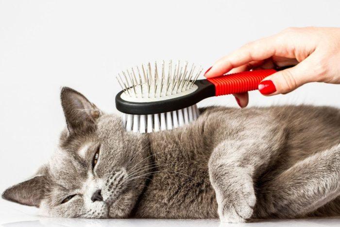 Кота вычёсывают щёткой