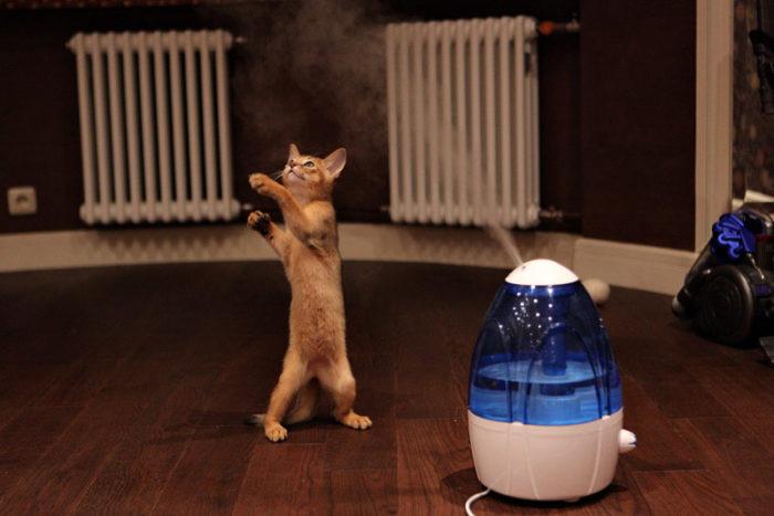 Котёнок и увлажнитель воздуха
