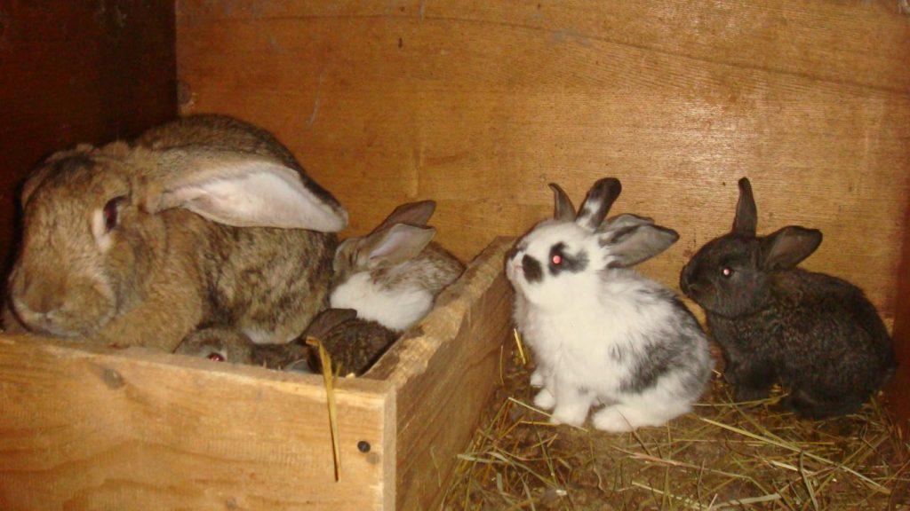 Крольчиха с крольчатами в клетке