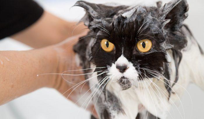 Намыленный кот