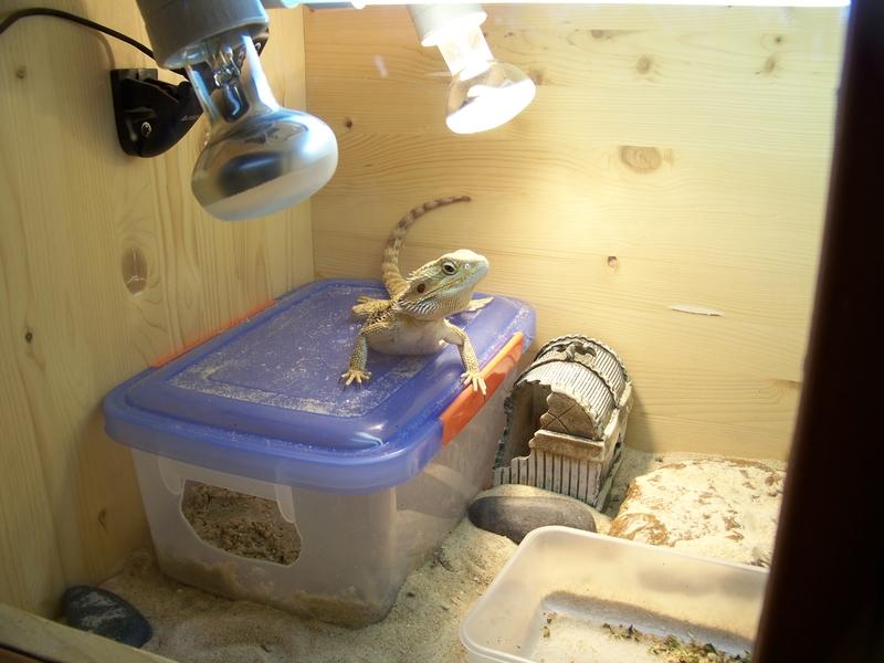 Обустройство места для откладывания яиц