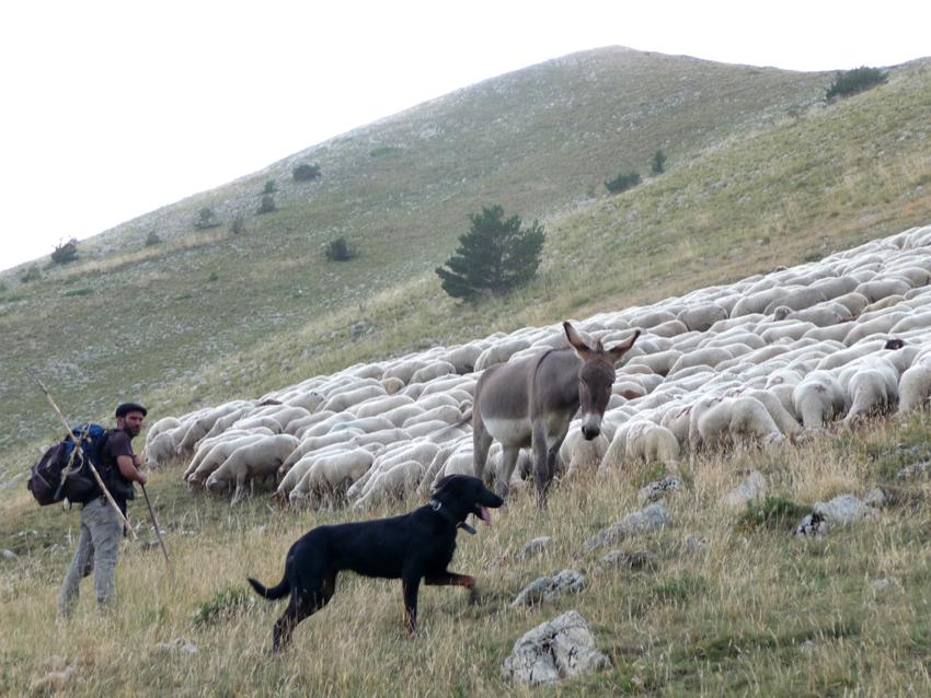 Босерон и стадо овец в горах