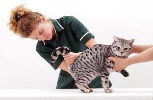 Мкб у кошки лечение в домашних условиях 50