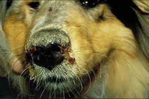 Методы лечения собак