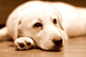 удаление паразитов из собак