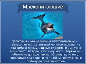 дельфин это млекопитающее животное или нет