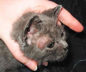 Насморк у кошек: лечение в домашних условиях - Ветеринар Гид 89