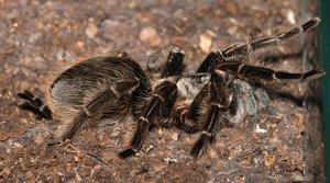 Образ жизни паука