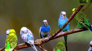 Попугаи в домашних условиях отзывы 129
