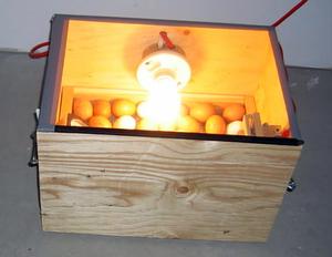 Инкубатор для цыплят в домашних условиях 30