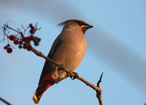 птицы севера фото и название