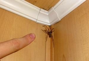 Описание домашних насекомых, обитающих в квартирах