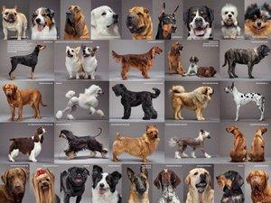 название породы собак и фото