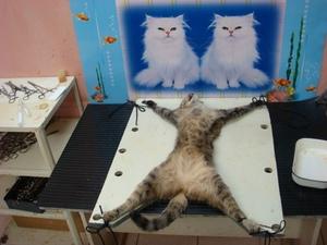Как сделать попону для кошки фото 313