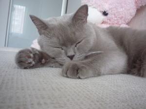 Демодекоз у кошек: лечение 78