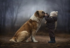 Алабай собака фото характеристика характер