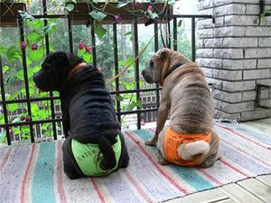 сколько идет первая течка у собак