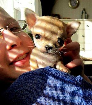 Туди - рекордсмен, он оказался самой маленькой собакой в мире