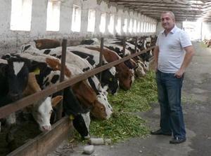 Откорм бычков бизнес план схема открытия фирмы