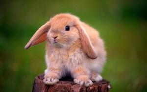 кролики живут