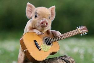 Минипиг с гитарой - забавные фотосюжеты