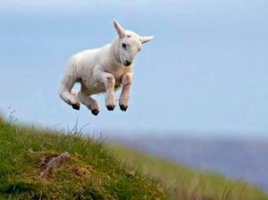 Кличка для козы – имена козлятам