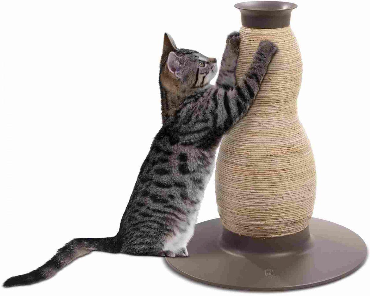 когтеточка и кот
