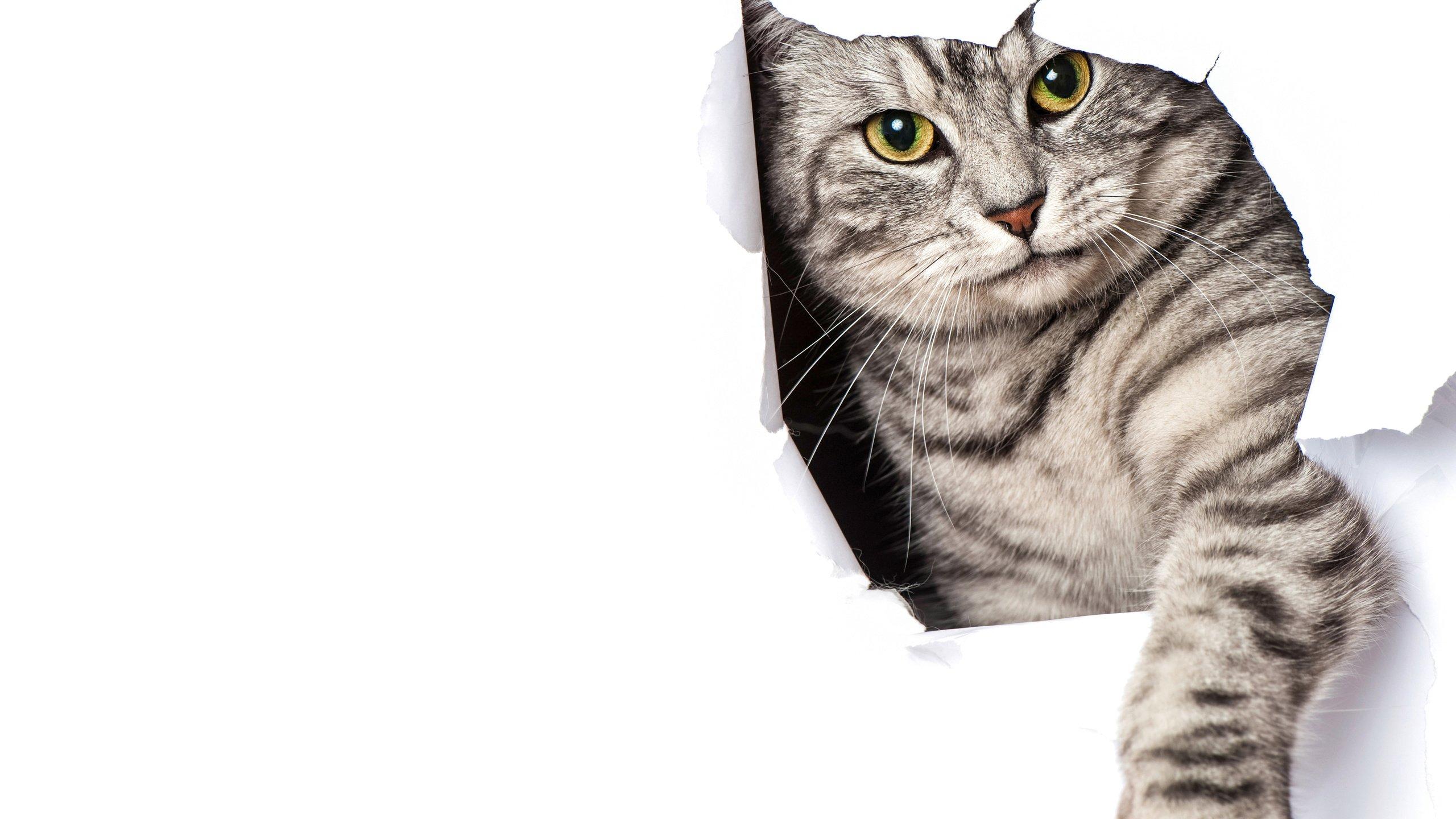 Как отучить кота или кошку драть обои