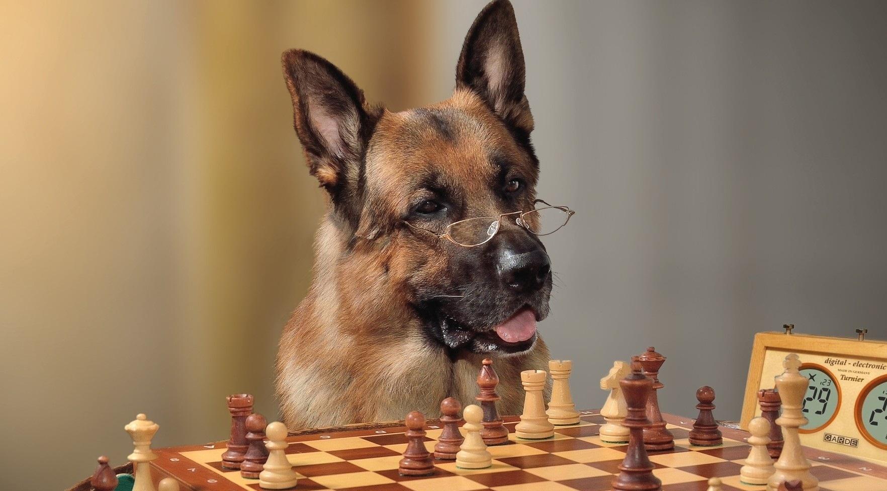 Самые умные породы собак в мире — топ 10
