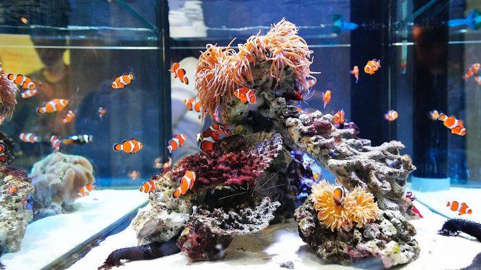 Аквариум для рыбок-клоунов