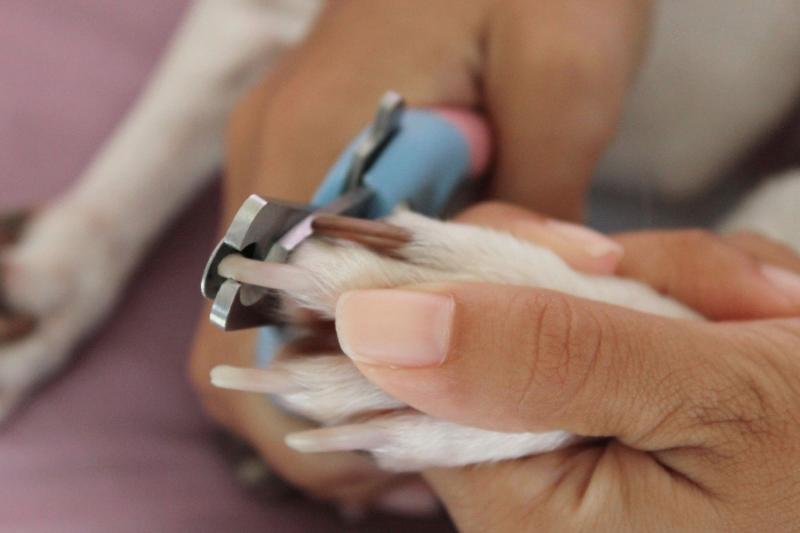 Как подстричь когти собаке безопасно: советы от ветеринаров