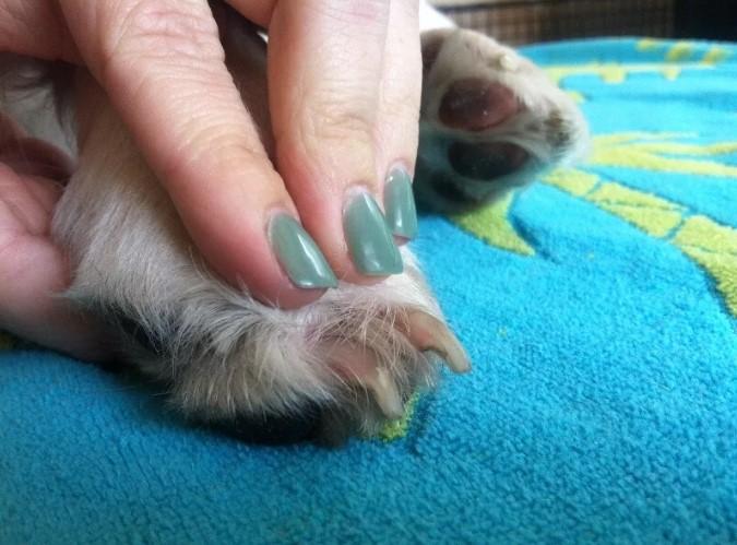 Отросшие когти у собак