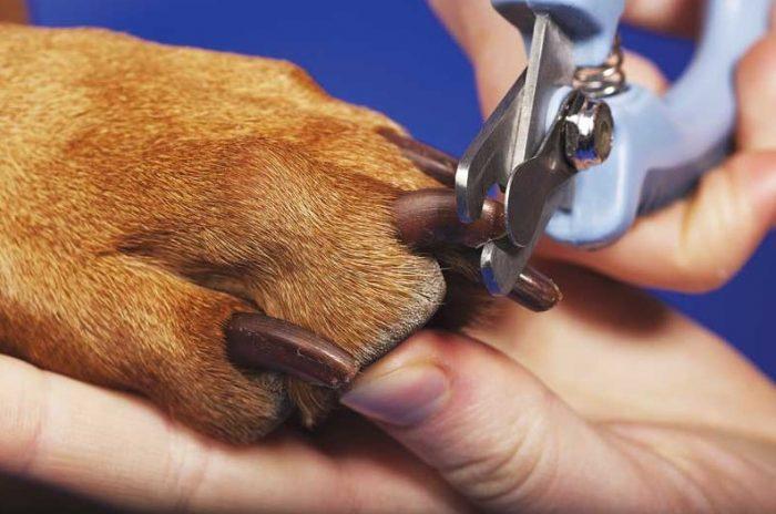 Кусачки для собак