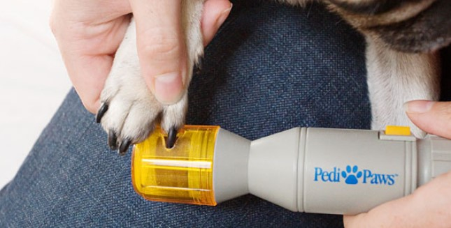 Собачий педикюр с помощью гриндера